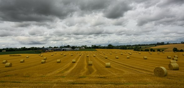 Carlow Fields of Gold